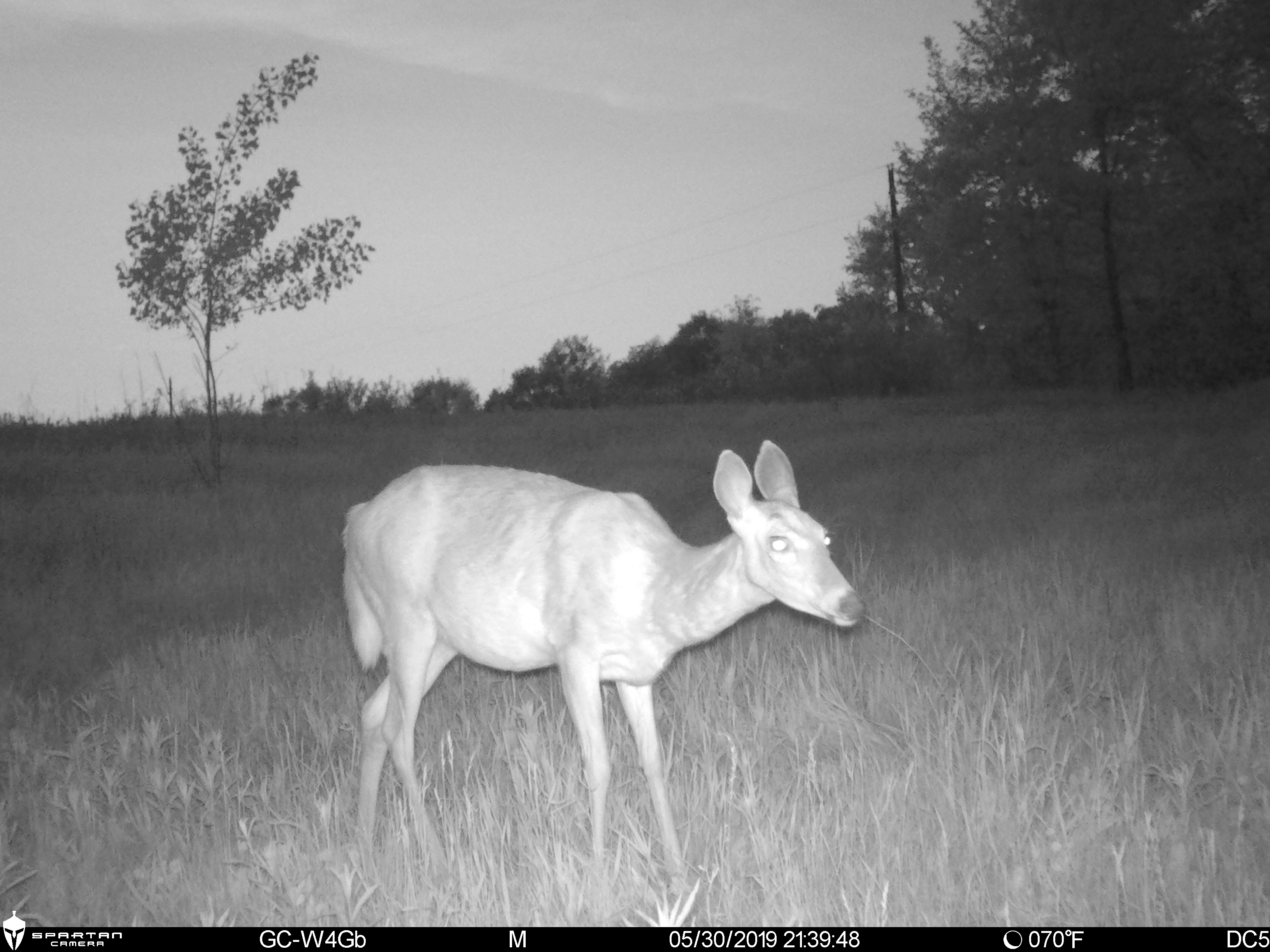 Spartan Ghost Trail Camera Night Picture
