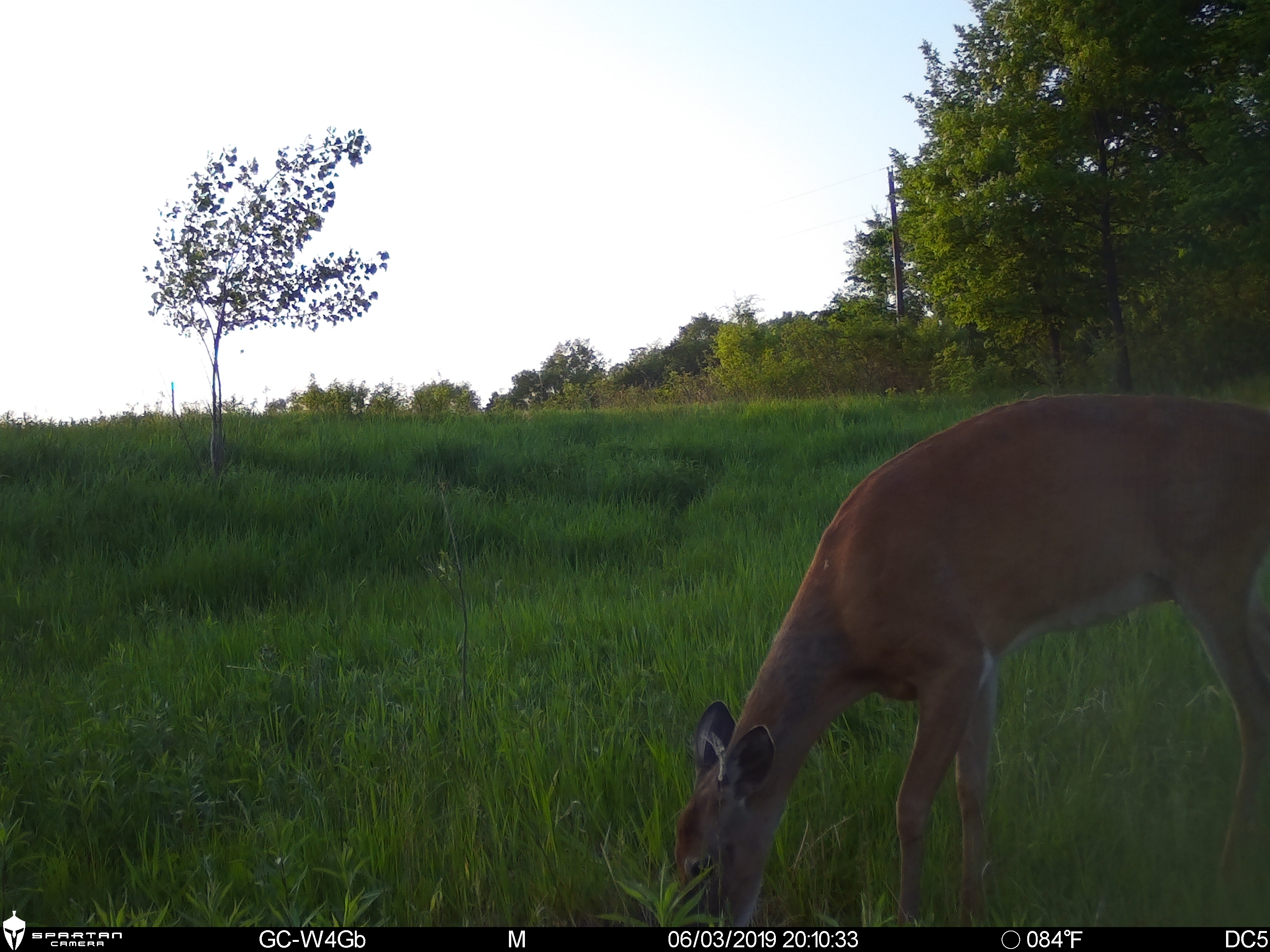 Daytime Picture Taken with the Spartan Ghost Trail Camera